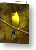 Backyard Goldfinch Digital Art Greeting Cards - Contemplating Goldfinch Greeting Card by J Larry Walker