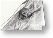 Livestock Drawings Greeting Cards - Contemplation Greeting Card by Dana Lysons