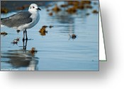 Barbara Shallue Photo Greeting Cards - Contemplative Greeting Card by Barbara Shallue