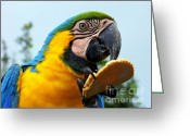 Exotic Birds Greeting Cards - Cookie Delight Greeting Card by Karen Wiles