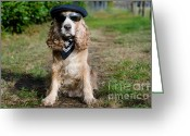 Cocker Spaniel Greeting Cards - Cool dog Greeting Card by Mats Silvan