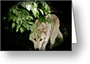 Playful Wolves Greeting Cards - Cool Spot Greeting Card by Debra     Vatalaro