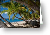 Palm Trees Greeting Cards - Cooper Island Greeting Card by Adam Romanowicz