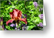 Iris Greeting Cards - Copper Iris Study 9 Greeting Card by Teresa Mucha