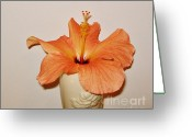 Peachy Greeting Cards - Coral Close Up Hibiscus Greeting Card by Marsha Heiken