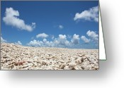 Horizon Over Land Greeting Cards - Coral On A Beach Greeting Card by Caspar Benson