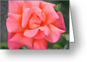 Peachy Greeting Cards - Coral Paris Rose Square Greeting Card by Carol Groenen