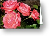 Colorful Roses Greeting Cards - Coral Roses Painting Greeting Card by Will Borden