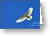 Blue Blood Greeting Cards - Corella in Flight Greeting Card by Kaye Menner