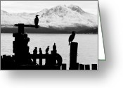 Harbor Living Greeting Cards - Cormoran bird sits on a pier in winter in a Fjord in Norway Greeting Card by Ulrich Schade