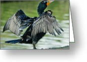 Seabirds Digital Art Greeting Cards - Cormorant 7  Wilderness Lakes Greeting Card by Nadine and Bob Johnston