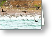 Pelicans Greeting Cards - Cormorant Flight in Frenzy Greeting Card by Gus McCrea
