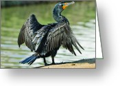 Seabirds Digital Art Greeting Cards - Cormorant Wilderness Lakes Greeting Card by Nadine and Bob Johnston