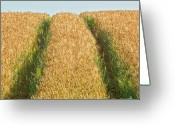 Cornfield Photo Greeting Cards - Corn field Greeting Card by Heiko Koehrer-Wagner