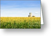 Grain Greeting Cards - Corn field with silos Greeting Card by Elena Elisseeva