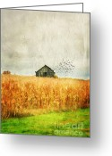 Cornfield Greeting Cards - Corn Fields of Kentucky Greeting Card by Darren Fisher