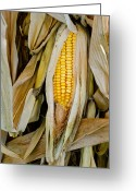 Tom Biegalski Greeting Cards - Corn in husk Greeting Card by Tom Biegalski