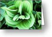 Outdoors Reliefs Greeting Cards - Corn Lily Greeting Card by Joe  Palermo