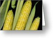 Silk Art Greeting Cards - Corn on the Cob I  Greeting Card by Tom Mc Nemar