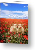 Twins Greeting Cards - Corn Poppies And Twin Lambs Greeting Card by Meirion Matthias