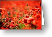 Spectacle Greeting Cards - Corn Poppies Greeting Card by Meirion Matthias