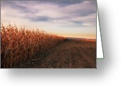 Rural Scene Greeting Cards - Cornfield Greeting Card by Michael Kohaupt