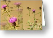 D700 Greeting Cards - Cornflower Collage Greeting Card by Donald Davis