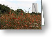 City Garden Greeting Cards - Cosmos in Tokyo Garden Greeting Card by Carol Groenen