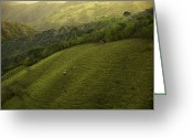 Green Pasture Greeting Cards - Costa Rica Pasture Greeting Card by Madeline Ellis