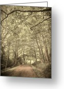 Scary Surreal Fantasy Art Greeting Cards - Cosy Path Greeting Card by Svetlana Sewell