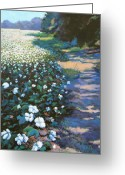 Green Field Painting Greeting Cards - Cotton Field Greeting Card by Jeanette Jarmon