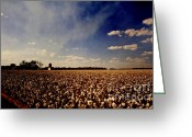 Canon 7d Greeting Cards - Cotton Field Greeting Card by Scott Pellegrin