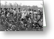 Planter Greeting Cards - COTTON PLANTER & PICKERS, c1908 Greeting Card by Granger
