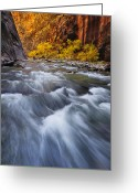 National Greeting Cards - Cottonwood Row Greeting Card by Joseph Rossbach