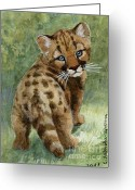 Puma Greeting Cards - Cougar Cub aceo Greeting Card by Svetlana Ledneva-Schukina