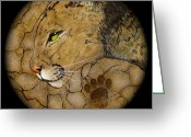 Shaman Drum Greeting Cards - Cougar Greeting Card by Ethan  Foxx