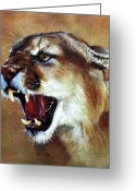 Cougar Greeting Cards - Cougar Greeting Card by J W Baker