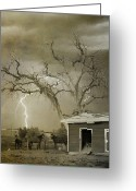 Lightning Weather Stock Images Greeting Cards - Country Horses Lightning Storm NE Boulder CO 66V BW ART Greeting Card by James Bo Insogna