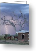 Lightning Bolt Pictures Greeting Cards - Country Horses Lightning Storm NE Boulder County CO 66V Greeting Card by James Bo Insogna