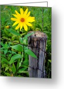 Ohio Country Greeting Cards - Country Living Greeting Card by Robert Harmon