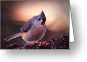 Titmouse Greeting Cards - Country Mouse... Greeting Card by Arthur Miller