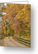 Autumn Photographs Greeting Cards - Country Ranch Road Autumn Portrait Greeting Card by James Bo Insogna