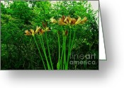 Digitalized Greeting Cards - Country Yellow Lilies Greeting Card by Marsha Heiken