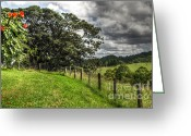 Fig Tree Greeting Cards - Countryside with old Fig Tree Greeting Card by Kaye Menner