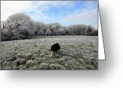 County Clare Greeting Cards - County Clare Lassie Greeting Card by John Quinn