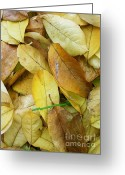 Leaves Photographs Greeting Cards - Covering The Green Greeting Card by Trish Hale