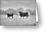 Missouri Photographer Greeting Cards - Cow  Greeting Card by Jane Linders
