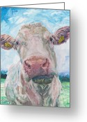 Charolais Greeting Cards - Cow no 04. 0223 Irish Charolais Cow Greeting Card by Dermot OGrady