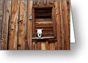 Ghost Town Greeting Cards - Cow skull in wooden window Greeting Card by Garry Gay