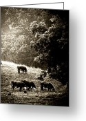Cows Framed Prints Greeting Cards - Cows Breaking Their Fast Greeting Card by Steve Buckenberger